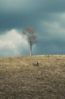 Wiosna krajobraz z widokiem nieżywego drzewa na wzgórzu