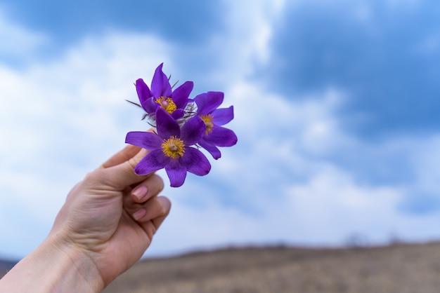 Wiosna kwiat marzeń trawa fioletowy, zbliżenie