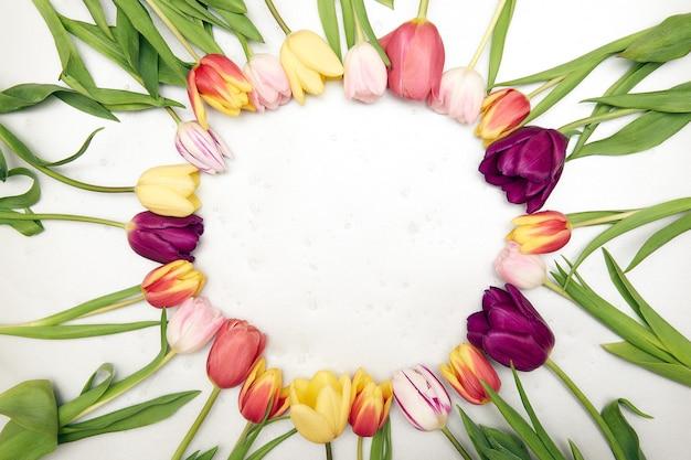 Wiosna kwiatowy tło z miejsca na kopię. płaska rama wykonana z kwiatów kwitnących tulipanów z kroplami wody, widok z góry, szeroka kompozycja. dzień kobiet, kartka z życzeniami na dzień matki!
