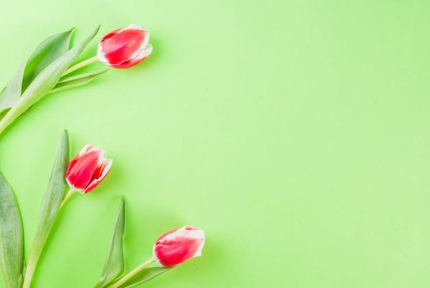 Wiosna kwiaty tulipany na zielono. widok z góry, karta z pozdrow