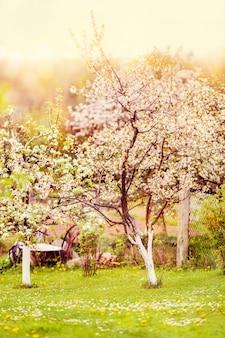 Wiosną kwitnące drzewa we wsi