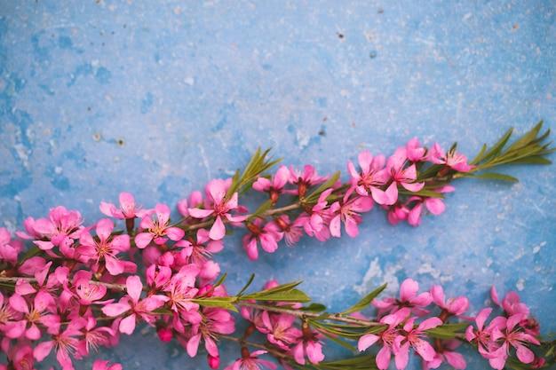 Wiosną kwitnące gałęzie, różowe kwiaty na niebiesko