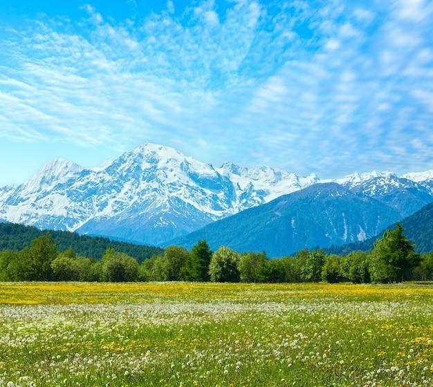 Wiosna kwitnących mniszka lekarskiego alpejska górska łąka (włochy) z błękitnym pochmurnym niebem