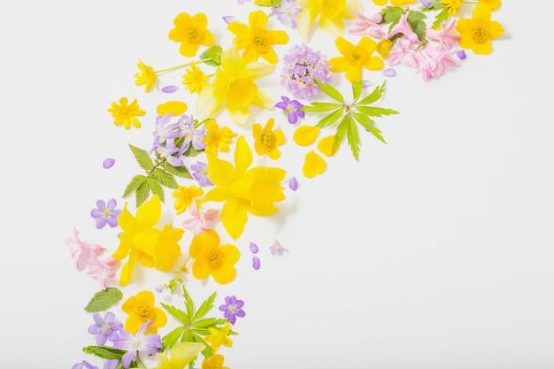 Wiosna kwitnie na białym tle