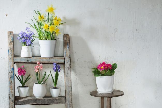 Wiosna kwitnie na tło bielu starej ścianie