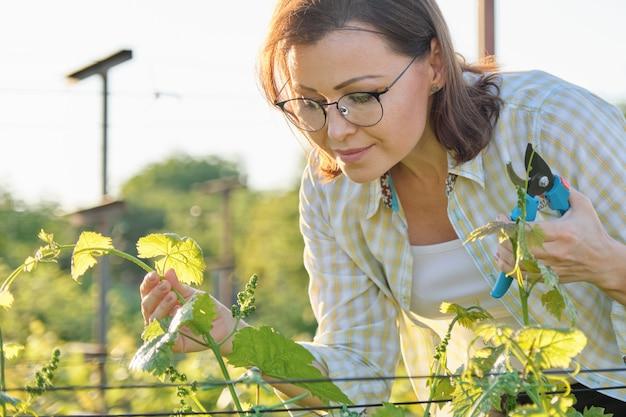 Wiosna lato prace ogrodowe w winnicy