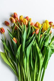 Wiosna - plakat z dowolną przestrzenią tekstową. żółte, pomarańczowe i czerwone tulipany. białe tło. widok z góry