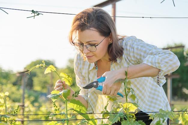 Wiosna portret dojrzała kobieta pracuje w winnicy
