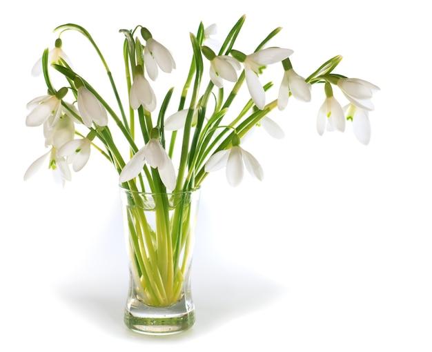 Wiosna przebiśnieg kwiaty nosegay na białym tle na białym tle z kilkoma cieniami. kompozytowe zdjęcie makro ze znaczną głębią ostrości.