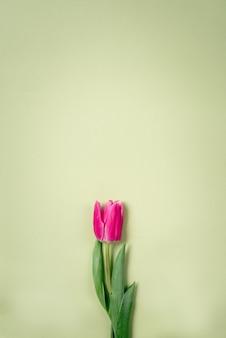 Wiosna purpurowi tulipany na zielonym tle.