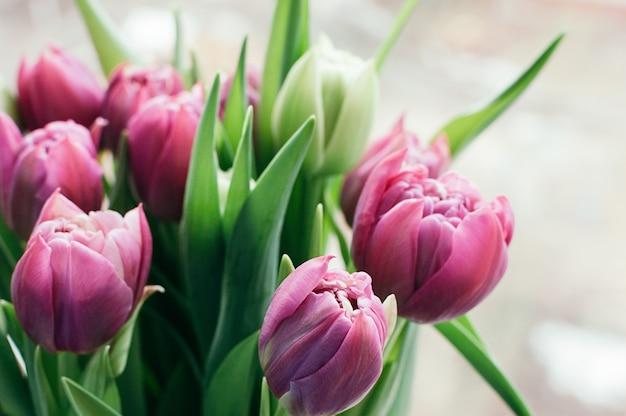 Wiosna różowe kwiaty niewyraźne streszczenie tło