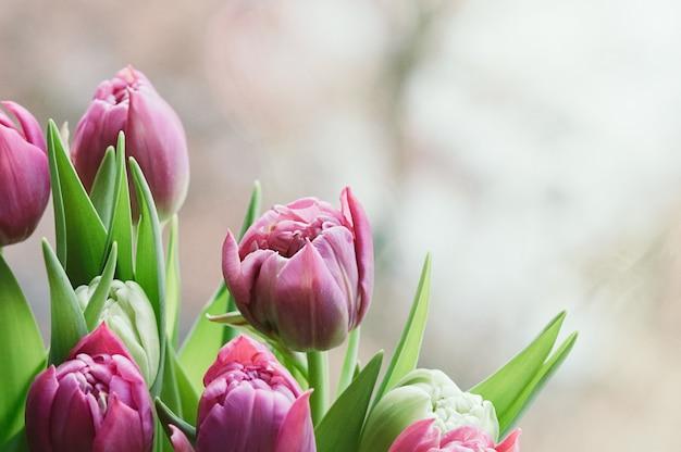 Wiosna różowe kwiaty streszczenie niewyraźne ściany