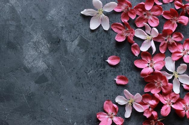 Wiosna różowe kwitnące kwiaty jabłoni na ciemnym tle