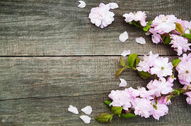 Wiosna sakura kwiat