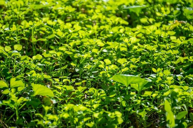 Wiosną zielone kiełki sięgają ciepłego słońca