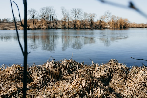 Wiosnę krajobraz z jeziorem porośniętym trzcinami w pobliżu wybrzeża i czyste niebo.