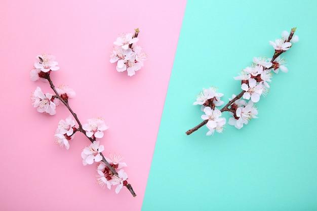Wiosny kwitnienie rozgałęzia się na kolorowym tle.
