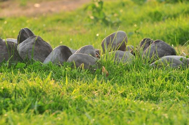 Wiosny natury tło z trawą i kamieniami