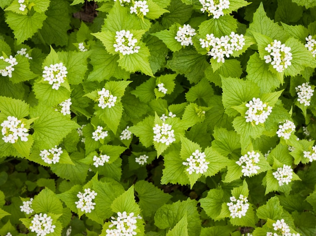 Wiosny natury tło z zieloną trawą i kwiatami