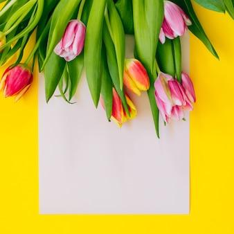Wiosny tło: różowi tulipany na beżowej karcie obramiającej z żółtym tłem. leżał płasko. skopiuj miejsce.