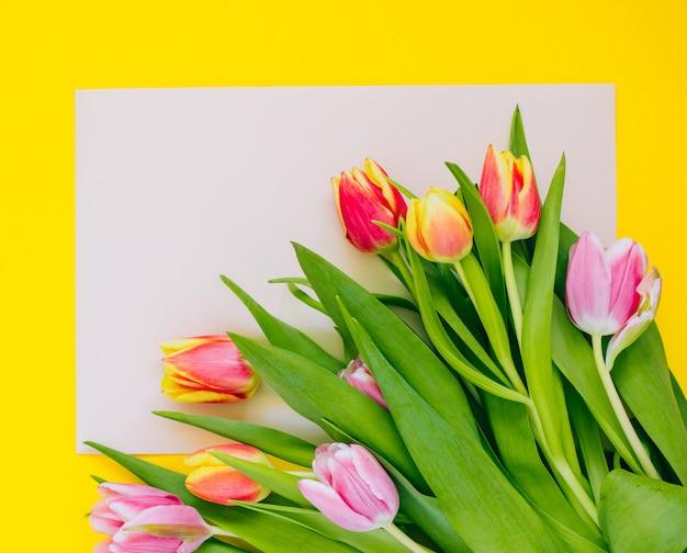 Wiosny tło: różowi tulipany na beżowej karcie obramiającej z żółtym tłem. poziome. skopiuj miejsce.
