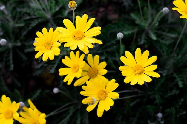 Wiosny zielony tło z pięknymi żółtymi kwiatami