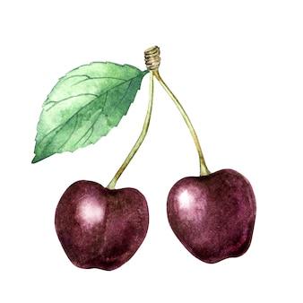 Wiśnie akwarelowe z liściem
