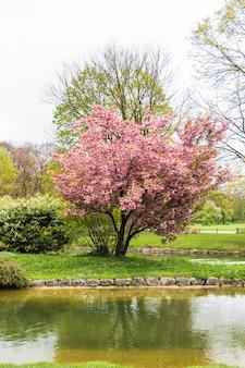 Wiśniowe drzewo przez wodę w ogrodzie