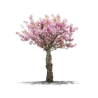 Wiśniowe drzewo w wysokiej rozdzielczości na białym tle na białym tle