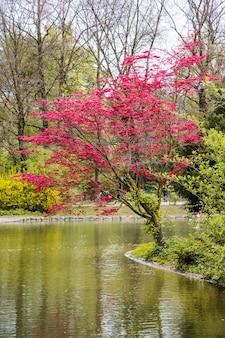 Wiśniowe drzewo zasadzone przez rzekę