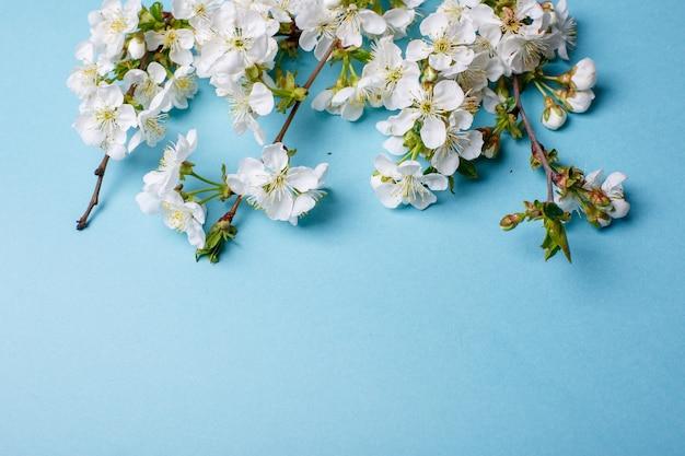 Wiśniowe kwiaty na niebieskiej powierzchni