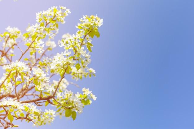 Wiśniowe kwiaty na niewyraźne charakter
