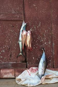 Wiszące ryby
