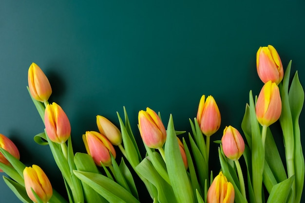 Witam wiosnę ze świeżymi żółto-czerwonymi tulipanami na ciemnozielonym tle. koncepcja międzynarodowego dnia kobiet, dnia matki, wielkanocy