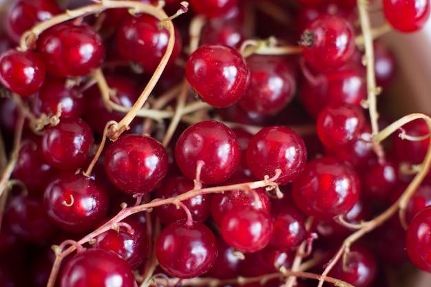 Witaminy letnie jagody. czerwona porzeczka tło. z bliska, selektywne focus. koncepcja zbiorów.