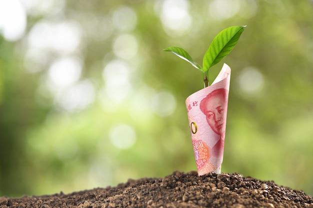 Wizerunek banknotu china yuan z roślinami rosnącymi na wierzchu dla biznesu, oszczędzania, wzrostu, gospodarki