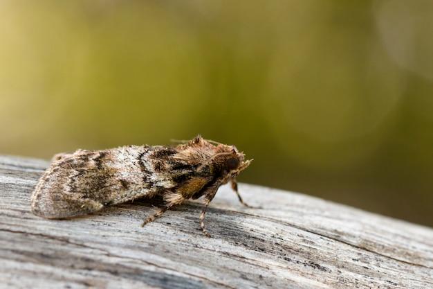 Wizerunek brown ćma na drzewie (nannoarctia tripartita). owad. zwierzę.