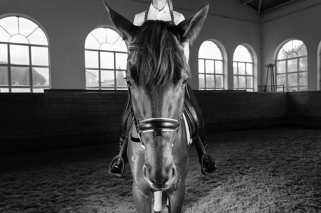 Wizerunek kobiety na koniu pełnej krwi. tło to arena wyścigowa. różne środki przekazu