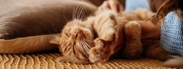 Właściciel pieści uroczego kota