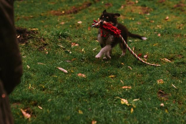 Właściciel psa bawi się z psem w parku