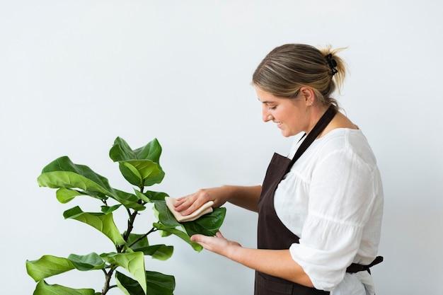 Właściciel Sklepu Z Roślinami Czyści Liść Rośliny Doniczkowej Darmowe Zdjęcia