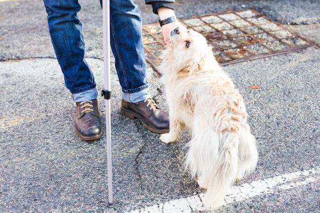 Właścicielka delikatnie pieszcząc swojego psa. męska ręka poklepująca białą głowę psa