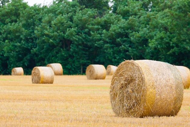 Włoska panorama wsi. okrągłe bele na polu pszenicy. rolnictwo, życie na wsi