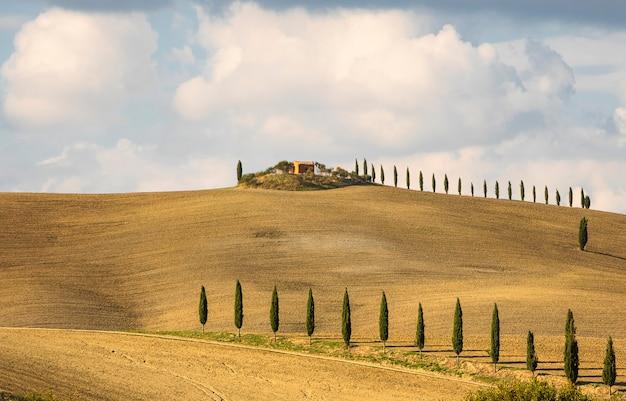 Włoski krajobraz wsi z polami cyprysu, pszenicy i jęczmienia w sienie, toskania. włochy