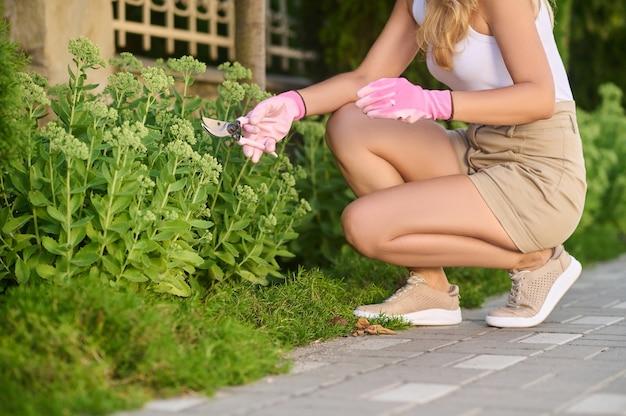Wnętrze ogrodu. kobieta przykucnęła przy kwiatach w różowych rękawiczkach ochronnych ze specjalnymi nożycami ogrodowymi w letni dzień, bez twarzy