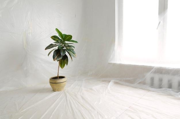 Wnętrze remontu domu zabezpieczone cienką folią z tworzywa sztucznego z zieloną rośliną w dużej ceramicznej doniczce