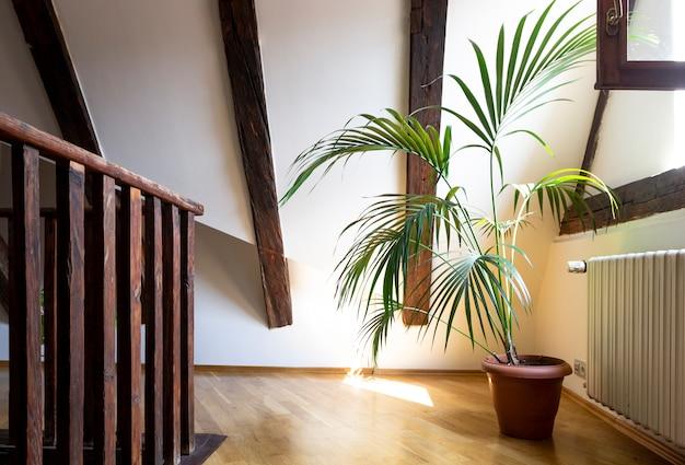 Wnętrze salonu na pustym poddaszu z sufitami z ciemnymi belkami i liśćmi palmowymi w doniczce