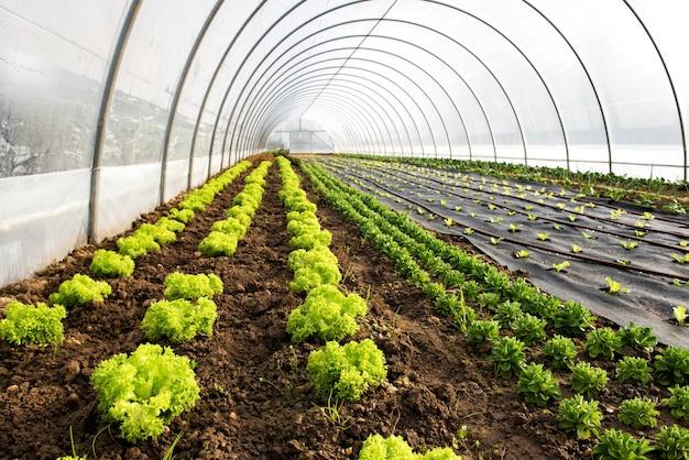 Wnętrze szklarni rolniczej lub tunelu