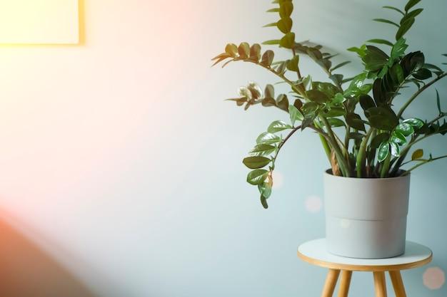 Wnętrze z domową rośliną niebieskie światło wnętrze z czystą pustą niebieską ścianą i dużą zieloną rośliną