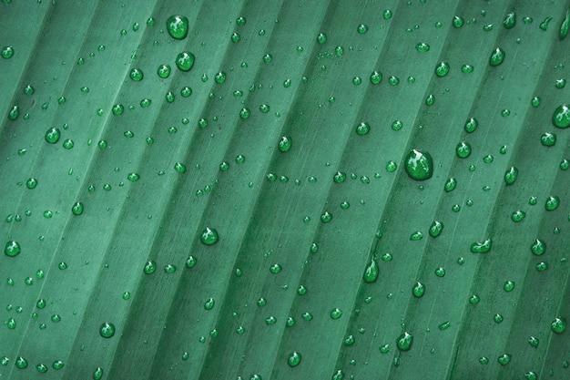 Wod krople na bananowym liścia tle
